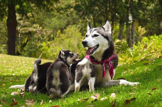 malattie genetiche del cane