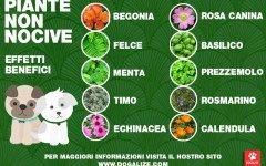 piante benefiche
