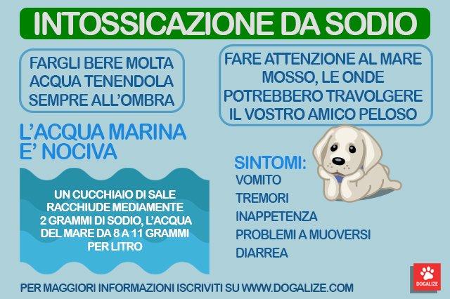 Infografica: intossicazione da sodio nei cani