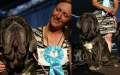 World's Ugliest Dog 2017: Martha cane più brutto del mondo