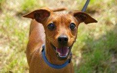 Cacca scura del cane, cause, rimedi e prevenzione
