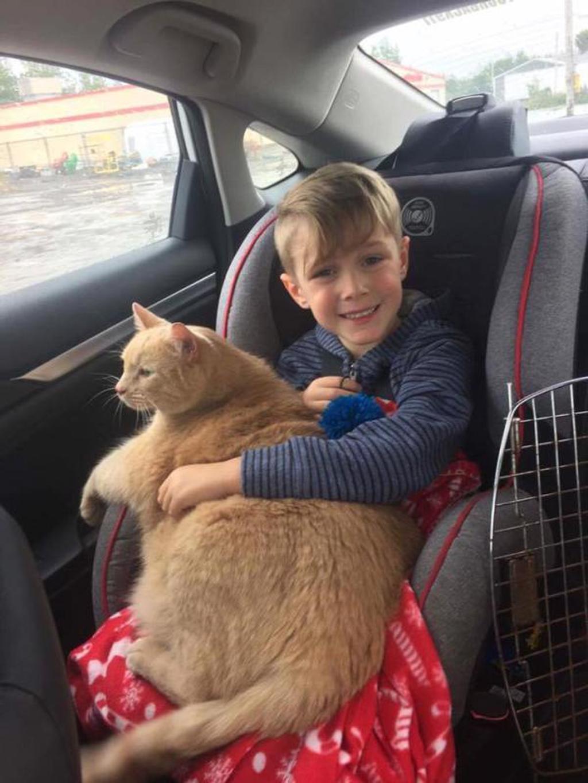 Bambino adotta gatto anziano, preferendolo agli altri
