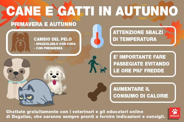 Infografica: cani e gatti in autunno, come prendersi cura di loro