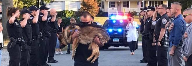 cane poliziotto malato