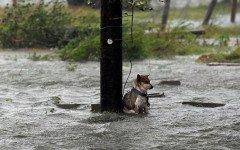 cani nell' uragano-harvey