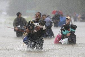 cani nell' uragano harvey