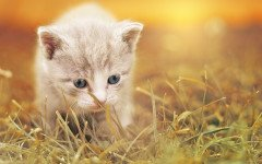 Sindrome cerebellare nel gatto, cause e rimedi