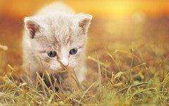 Sindrome cerebellare nel gatto, cause e rimedi