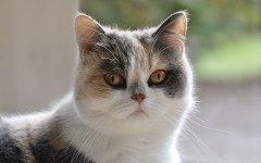 Alimentazione del gatto con pancreatite