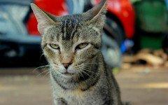 cose che fanno impazzire il tuo gatto