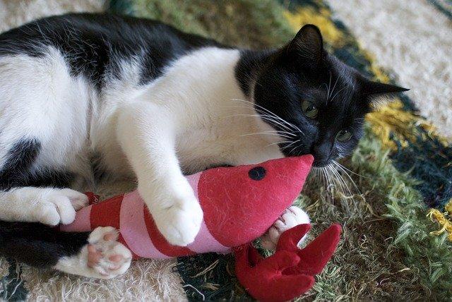 Come rendere felice il gatto quando non siamo a casa