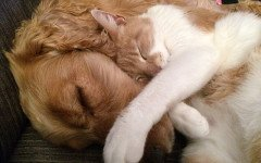Dormire con il cane o il gatto fa bene alla salute
