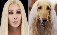 Cher, icona pop e animalista in difesa dei cani