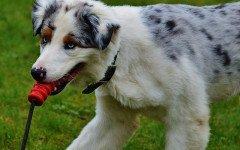 Come attirare l'attenzione del cane: educazione e addestamento