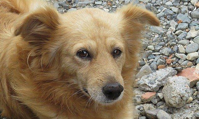 cura del linfoma nel cane