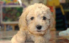 malattie fungine del cane