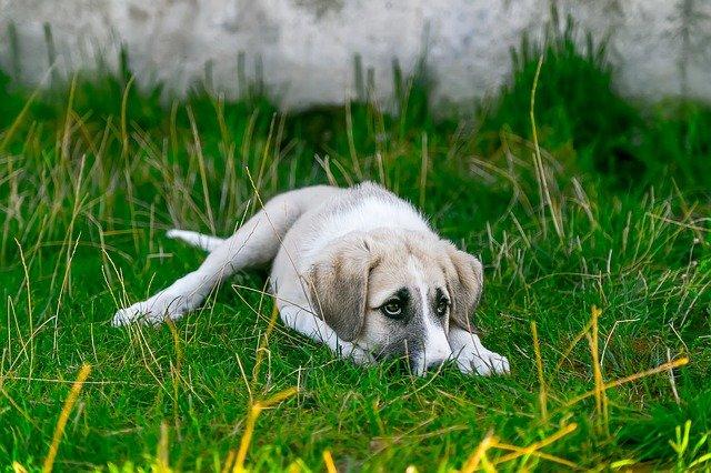 Malattie del cane che fanno prudere la pelle