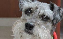 malattie endocrine del cane
