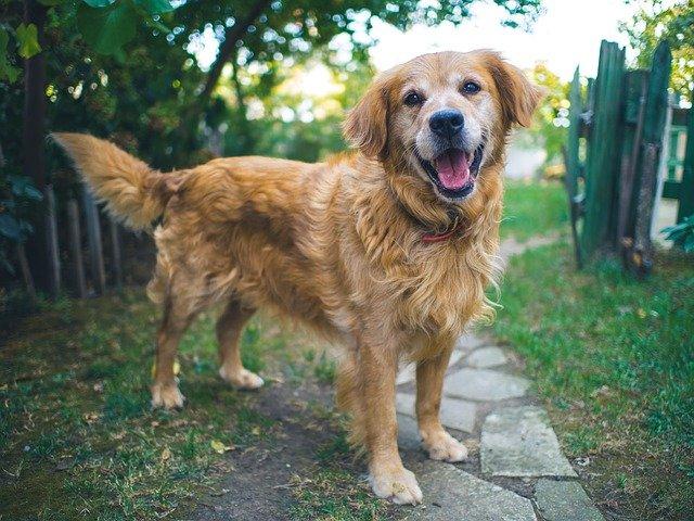 cane è destro o mancino
