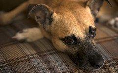 Elenco malattie del cane: quali sono le più diffuse?