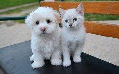 avvelenamento da naftalina nel cane e nel gatto