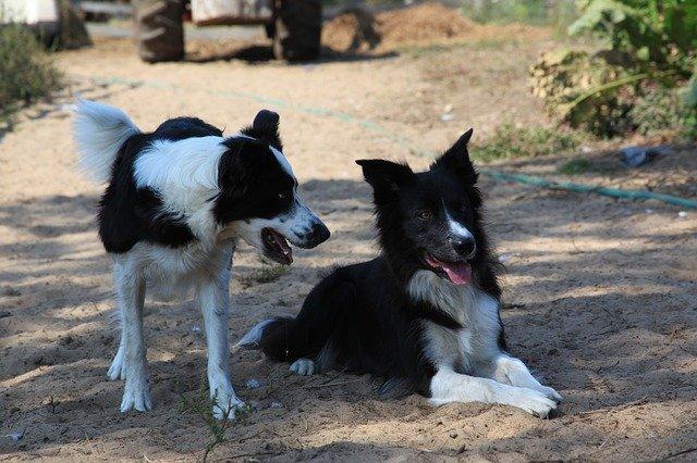 malattie ereditarie del cane
