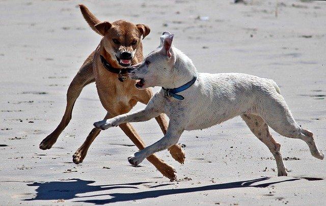 Lista cani pericolosi: quali sono i cani più aggressivi?
