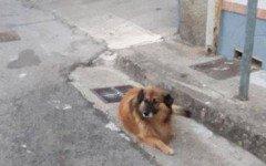 cane aspetta padrone defunto