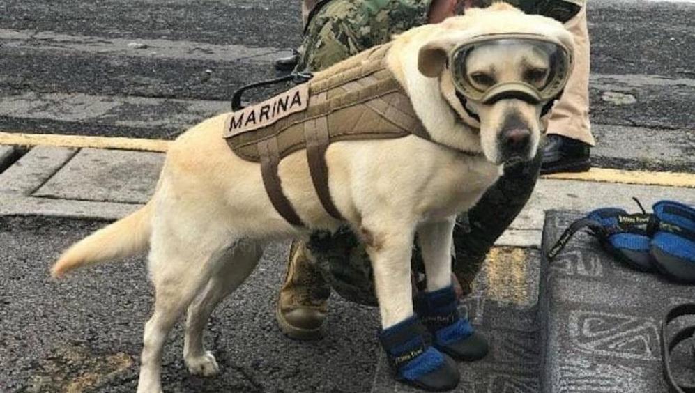 Cane eroe Frida salva numerose vite durante il terremoto