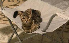 Gatto si fa adottare: entra da una finestra e trova una casa