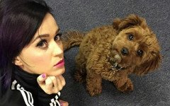 Katy Perry: ¿conoces su mascota Nuggets?