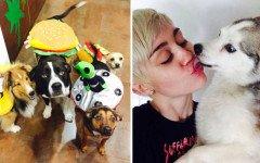Miley Cyrus: conoce las mascotas de esta joven artista