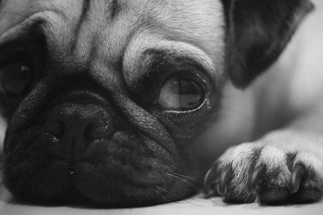 Malattie alle unghie del cane: le più comuni
