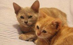 eredità ai gatti