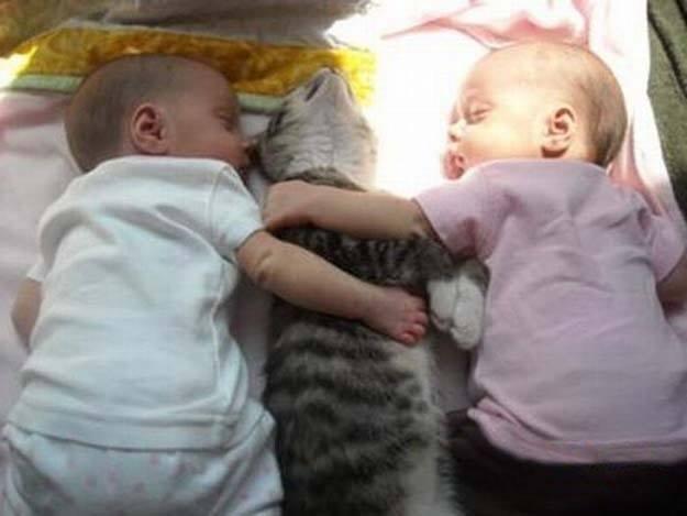 Foto Gatti e Bambini Foto Gatti e Bambini