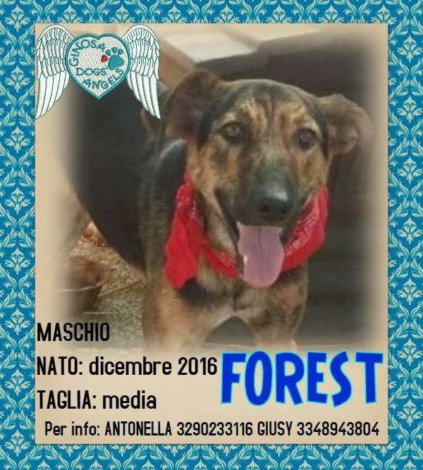 Appello per adozione: Forest cerca casa!