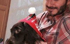 Raza del perro de los Beckham: hermoso peludo