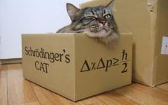 Gato schrodinger: un experimento imaginario novedoso
