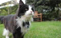 El gato de Gran Hermano: una versión alternativa
