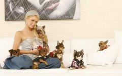 Paris Hilton: ¿conoces sus mascotas?