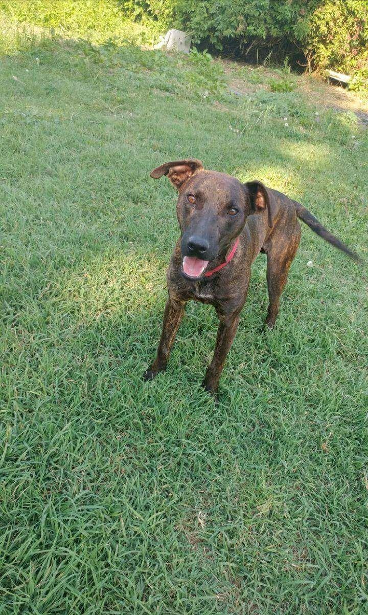 Appello per adozione: Morgan cerca casa