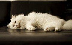 Segnali di invecchiamento del gatto: quali sono?