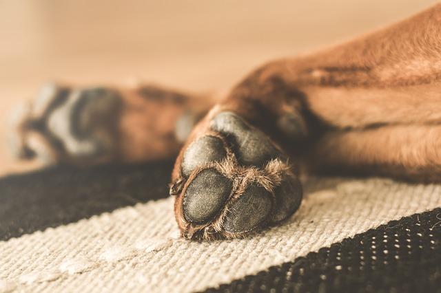 Huellas perro: la identidad de tu mascota