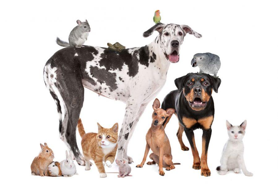 Giornata Mondiale degli animali, San Francesco