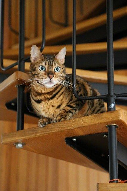 gatto scale