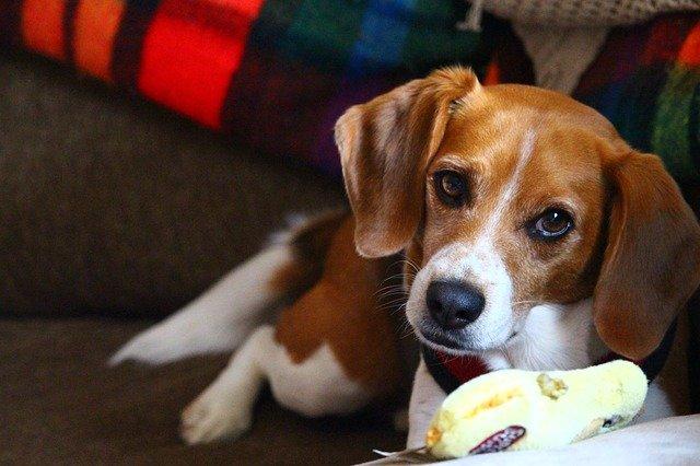 permesso retribuito per curare il cane