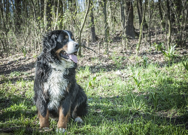 What is a Mountain Dog and Which are the Best