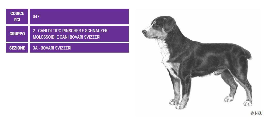 Bovaro dell'Entlebuch, carattere e caratteristiche - Razze cani