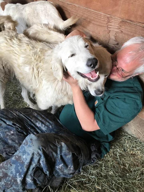 cane eroe protegge capre