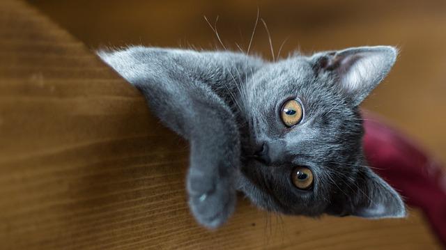 6 modi in cui avere un gatto cambierà la vostra vita
